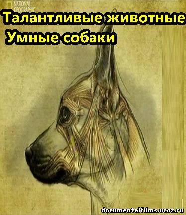 Смотреть фильм песня никому неизвестная на русском языке