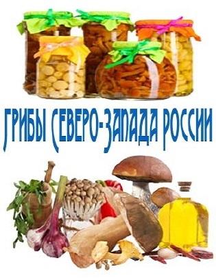 Грибы Северо-Запада России (2014)