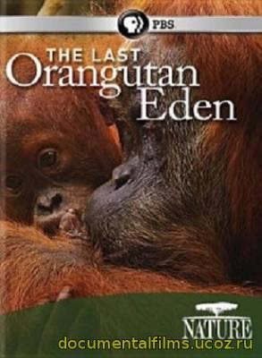 Последний рай орангутанов (2015)