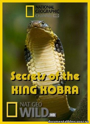 Змеи рептилии земноводные пресмыкающие