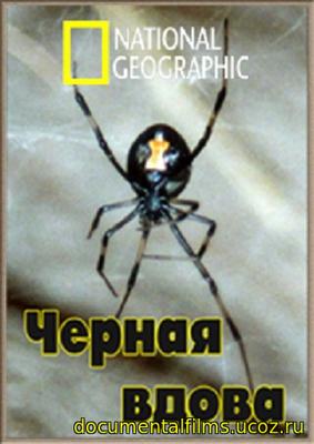 Black Widow Spider Facts Latrodectus mactans